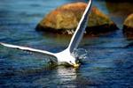 fångsten2