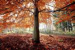 Under trädet