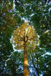 Träd i höstskrud