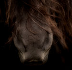 Hästmule