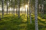 Medskogssjön, Gästrikland