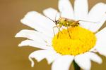Insekt på blomma