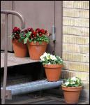 Blommande ståltrappa.