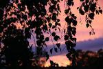Solnedgång en septemberkväll