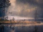 Mystik i skogen