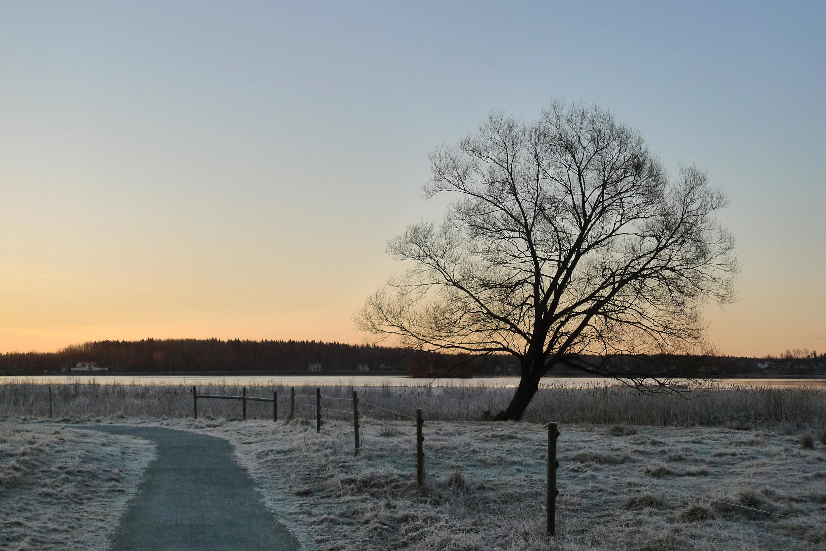 Trädet 30 mars 2017