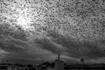 Fågelstorm