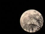 Supermånen med grenar