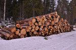 Förbjuden skog
