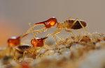 Termiter