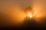 Huset i dimman
