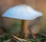 Besök i svamparnas värld 1