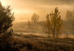 Gyllene frostmorgon på myren