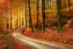 Vägen genom drömskogen