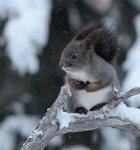 Blåsigt och kallt för ekorren