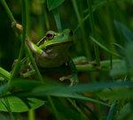Den lilla gröna Prinsen.