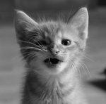 arg kattunge