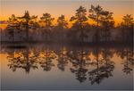 Bärnstensfärgad morgon
