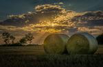 Höbalar i solnedgång