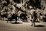 Nomader på väg upp för Kabul Gorge