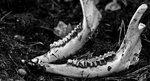 Tidens tand