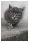 Kattunge på jakt