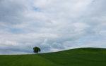 Trädet