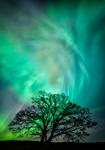 Eken och Aurora - ett sällsamt möte