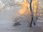 Vinterköld