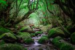 Skogens djup