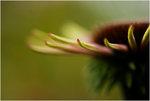 En blommig spets