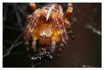 Spindel med byte