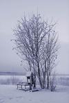 Första vinterdagen i Luleå 2006