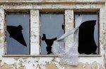 Fågelns och kaninens lyckosamma flykt från Gulag