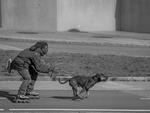 hund drar man på inlines