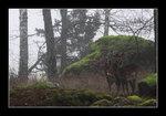 Hjort e Hjort
