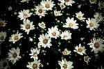 Blomchryss på altan