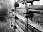 Det gamla staketet