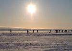 Lämmeltåg på sjön