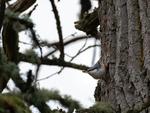 Bird and Nut
