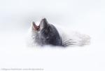 Arctic calmness