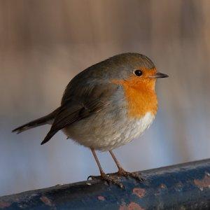 Fågel.jpg
