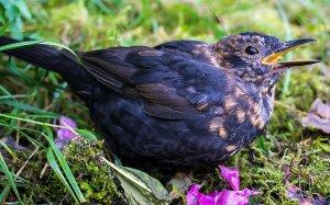birdy_800x498_pixel.jpg