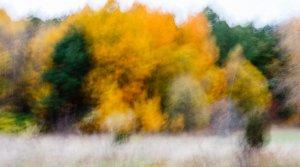 Autumn_2005-10-16.jpg
