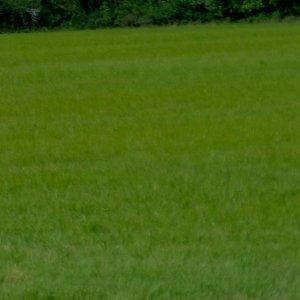 fieldwithsky3.jpg