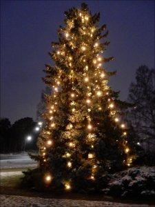 Stora_julgranen_i_Hörnparken_Näsbydal_15_12_2018.jpg