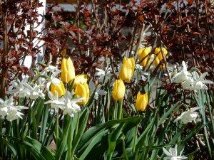 Blommor_på_vår_innergård_9_5_2020.jpg