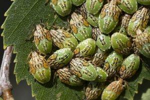 Insekter_210712_1005390_2.jpg