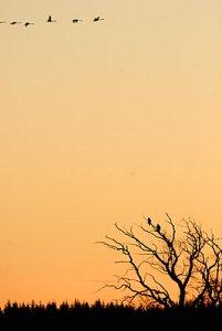 rnar, Hornborgasjn | Fotosidan Forum