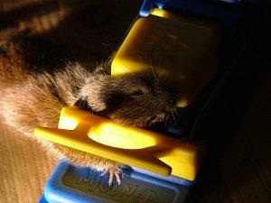 023 mus i fälla.jpg